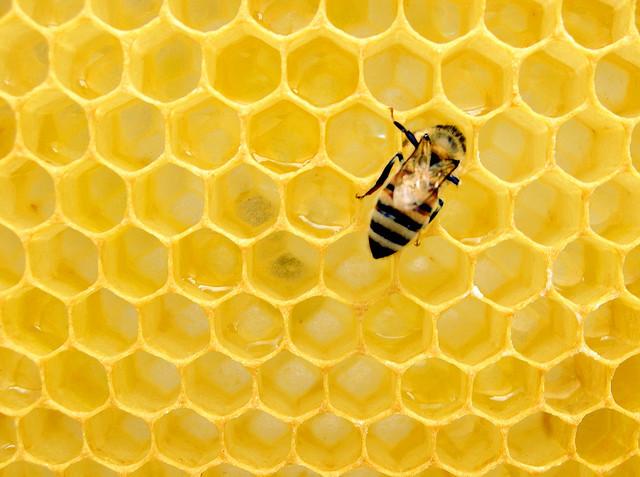 het gevoel van warme honing